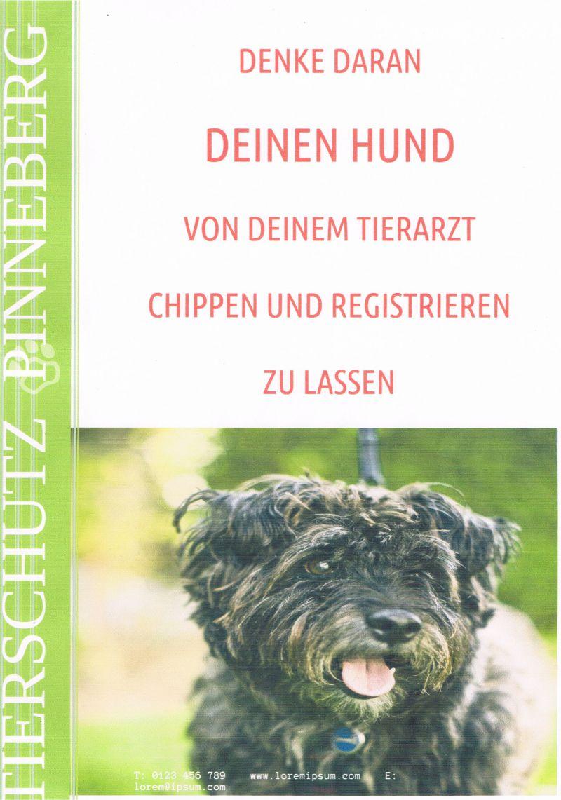 Denke daran, deinen Hund chippen zu lassen