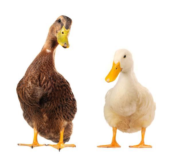 Aufklärung zur Tierhaltung