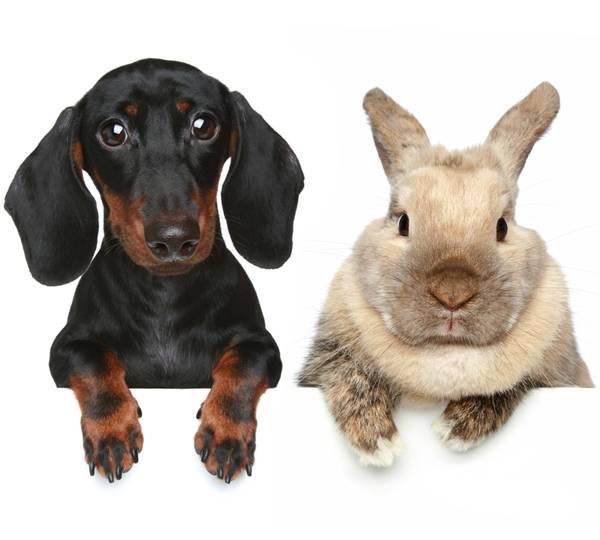 Tiervermittlung