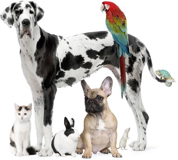 Tierschutzverein Pinneberg